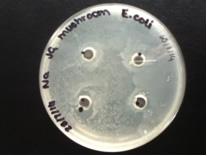 Oyster Mushroom- E.coli1.jpg