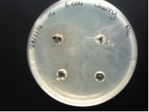 Cherry- E.coli2.jpg